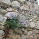 Roquefort-mauve-LMDI